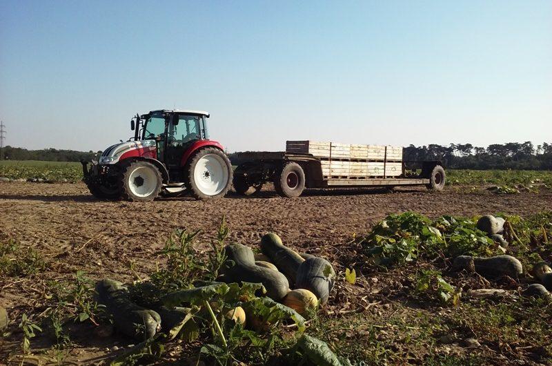 Traktor bei der Kürbisernte