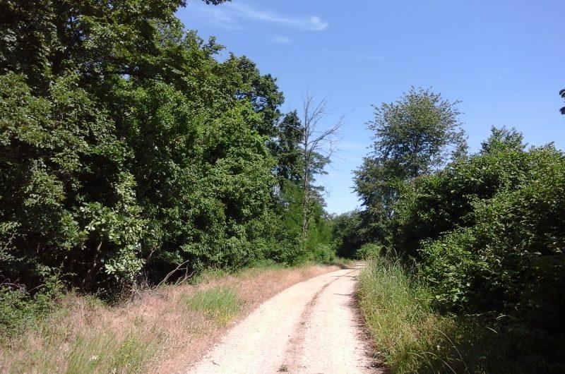 Wanderweg durch den Hochleithenwald