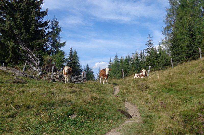 Weg zur Gerstreitalm