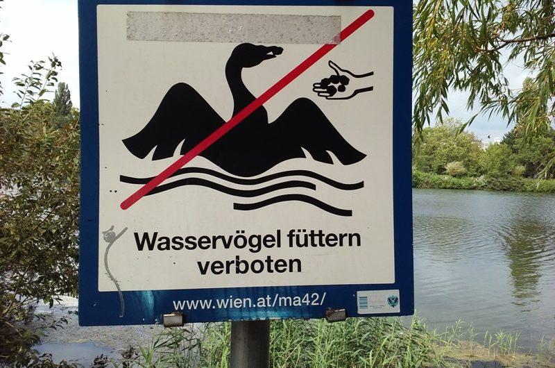 Wasservögel füttern verboten