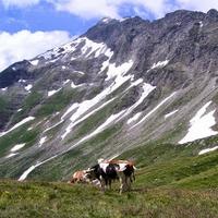 Bergwandern in Österreich