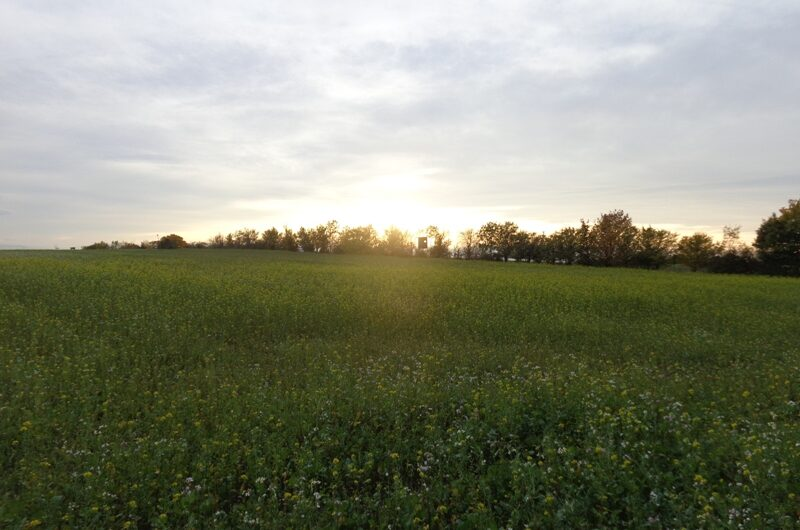 Sonnenuntergang am Detzenberg