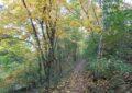 Herbst am Wolkersdorfer Walderlebnisweg