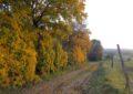 Herbstwanderung am Detzenberg