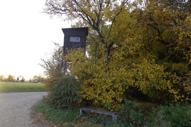 Hochsitz am Hochleithenwaldrand
