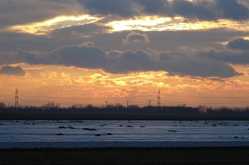 Spargel im Sonnenuntergang