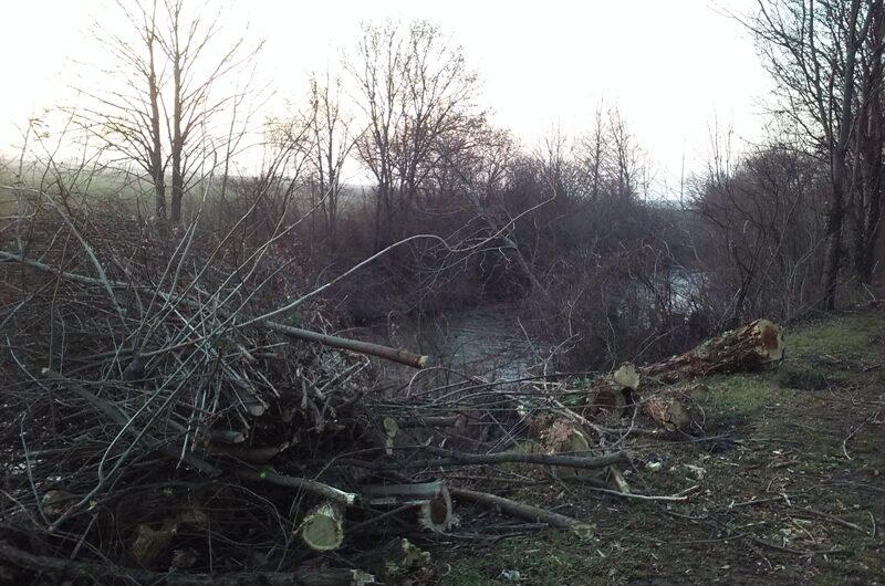 Holzschnitt am Marchfeldkanal