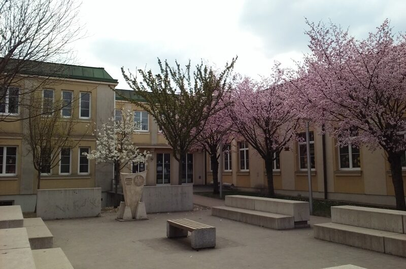 Frühlingsblüten bei der Volksschule