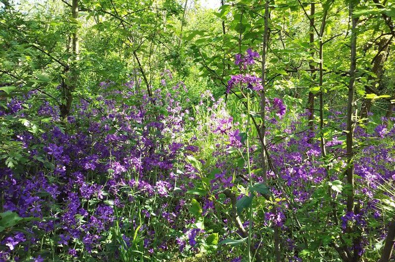 Wagramer Wald