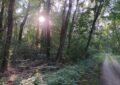 Rundweg im Auwald bei Orth