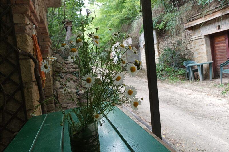 Blumen in der Passleithen