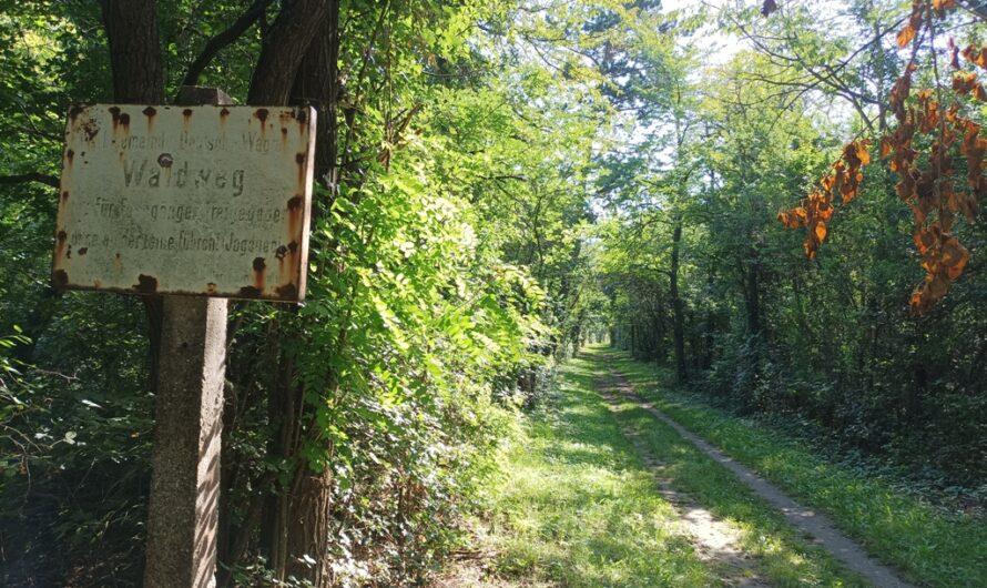 Waldweg hinterm Sportplatz