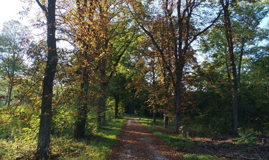 Herbst im Hochleithenwald